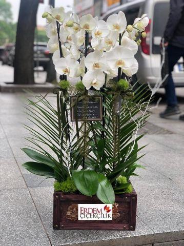 Beyaz 4 lü Orkide