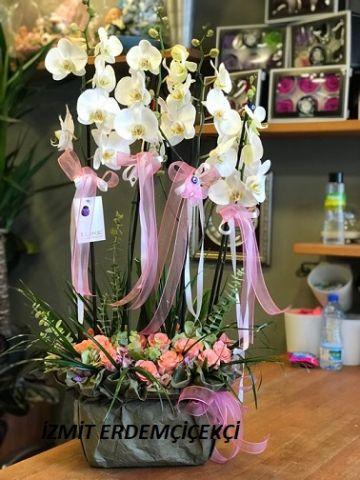 Orkide 07