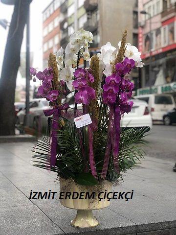 Orkide 01